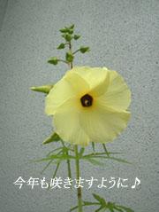 okura00.jpg